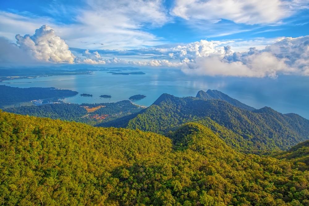 jungle malaisie