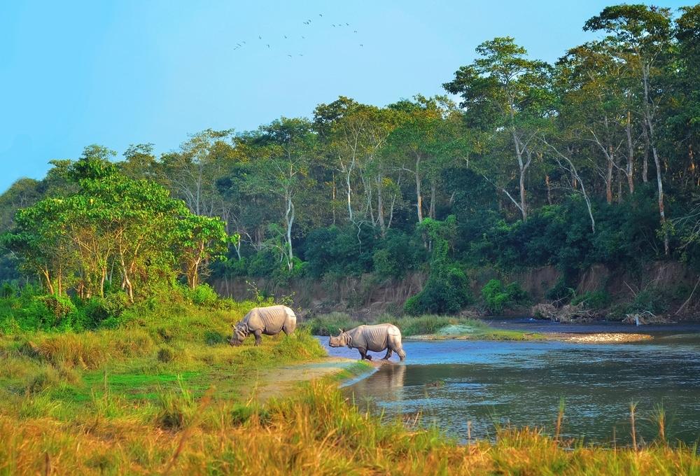jungle nepal rhinoceros