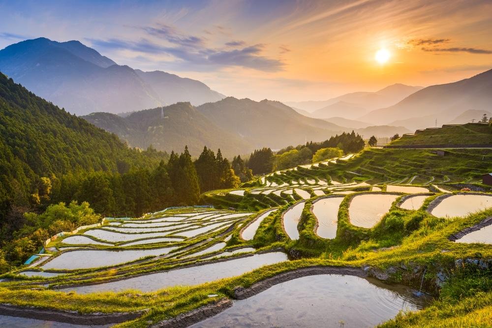 kumano terrasse rizieres au japon