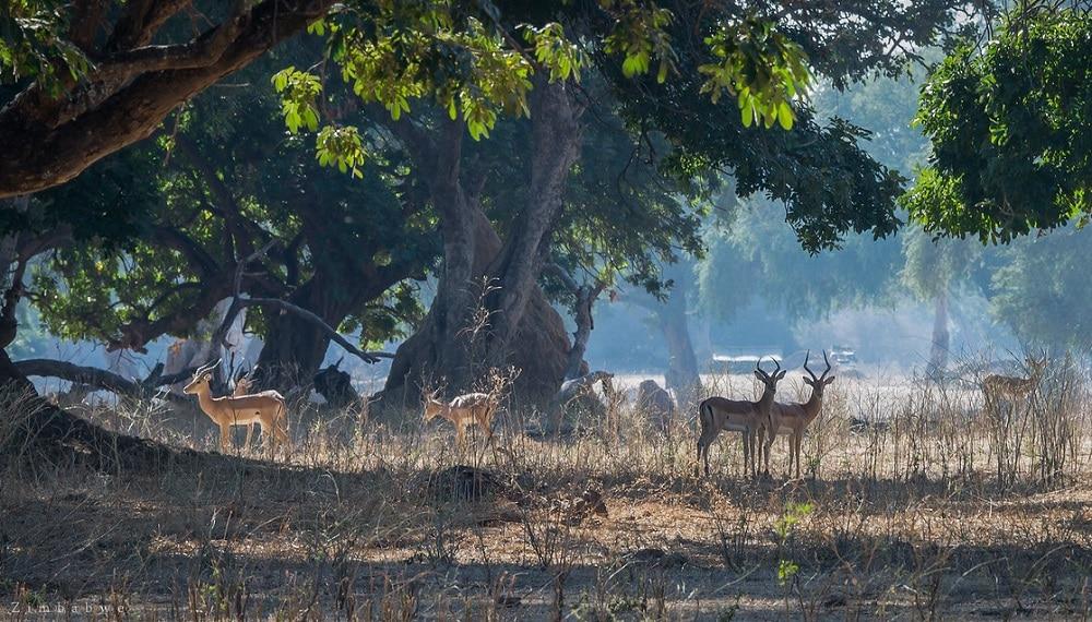 Animaux, safari, Mana Pools