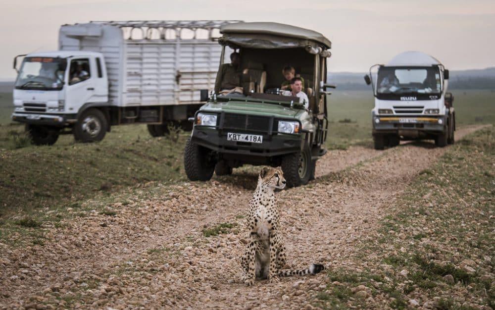 Safari, Massaï Mara
