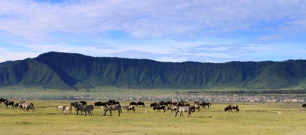 ngorongo cratere animaux safari afrique