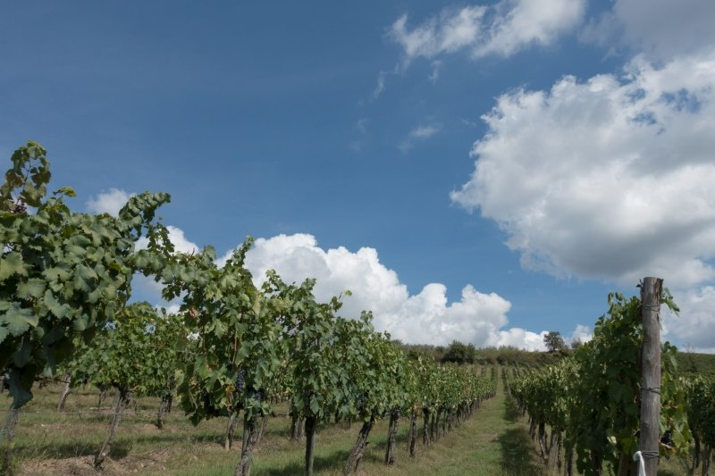 paysage vigne toscane route des vins