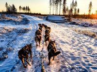 Quelle est la meilleure période pour visiter la Laponie ?