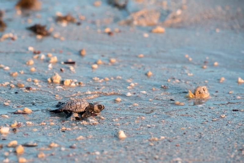 playa tortuga cuba