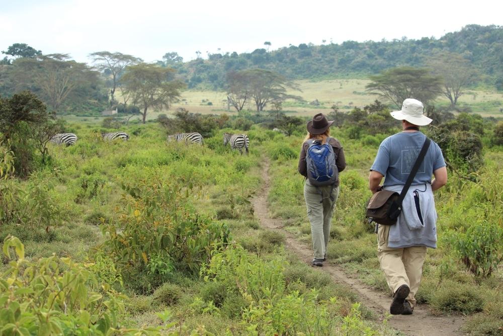 randonnee au kenya au milieu des zebres