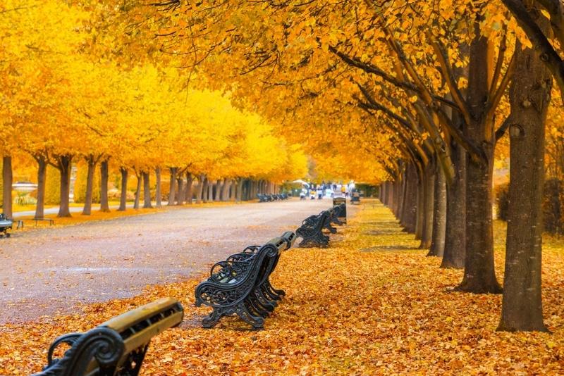 regent s park londres feuilles couleurs automne