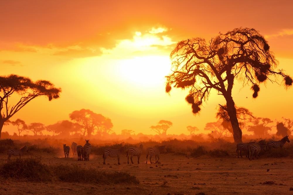 reserve masai mara safari coucher soleil