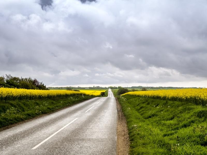 route campagne danemark champs fleuris ete