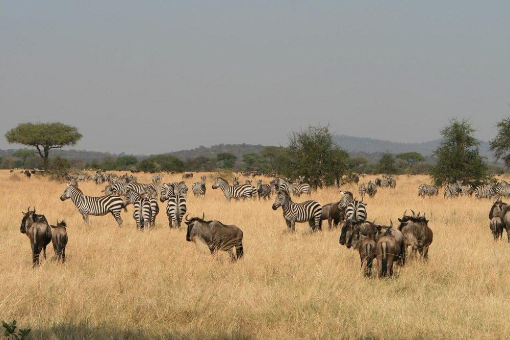 Safari à Serengeti