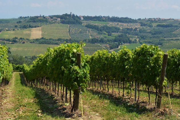 Route des vins en Toscane : 6 idées d'itinéraires pour en profiter