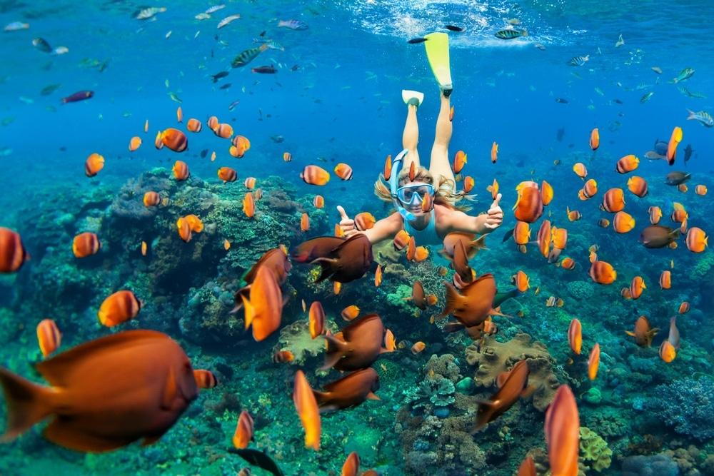 snorkelling poisson