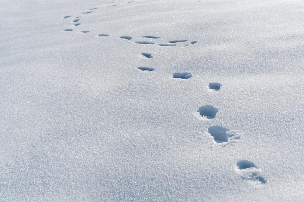 traces de pas elfes en islande