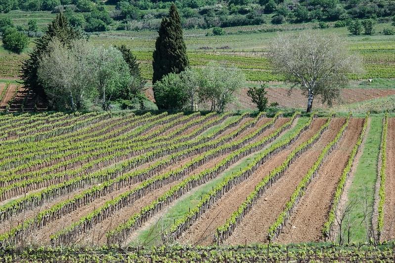 Route des vins de la côte des Etrusques Toscane
