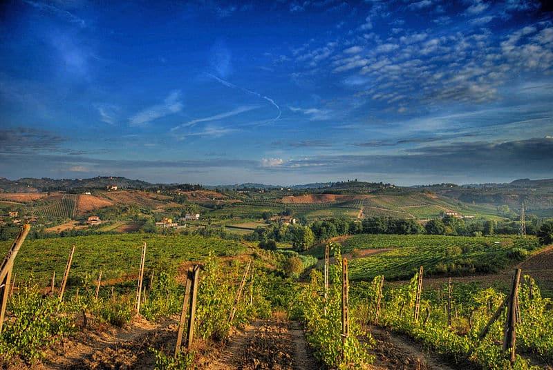vignes toscane