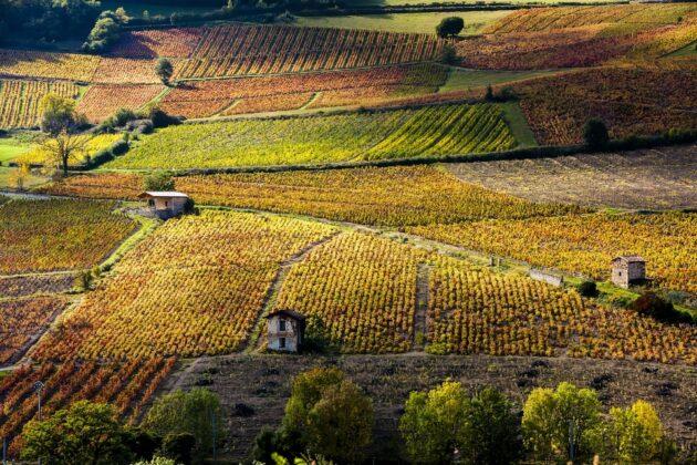 Les 16 meilleures régions de France pour déguster du vin