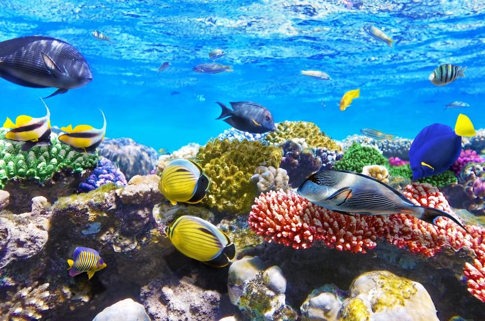 Corail et poissons en mer Rouge.Egypte