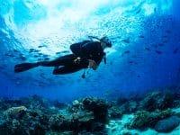 Quelle assurance voyage pour faire de la plongée sous-marine ?