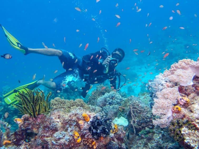 L'Île de Sipadan en Malaisie, plongée