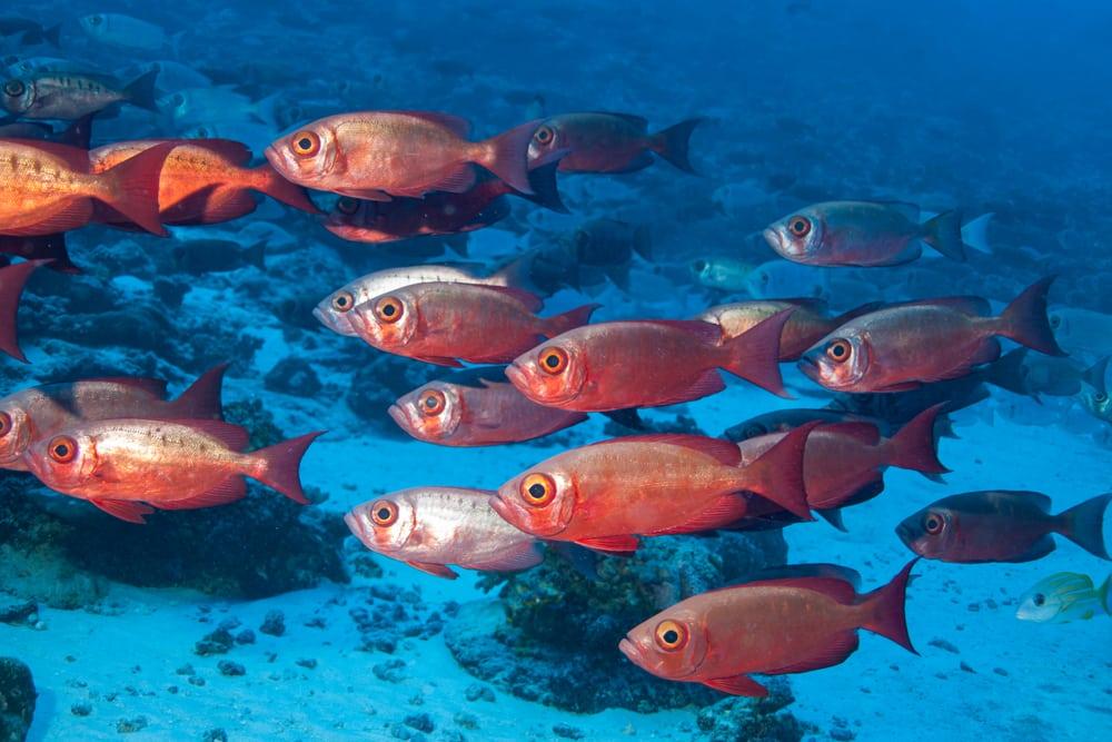 L'atoll de Rangiroa, poissons