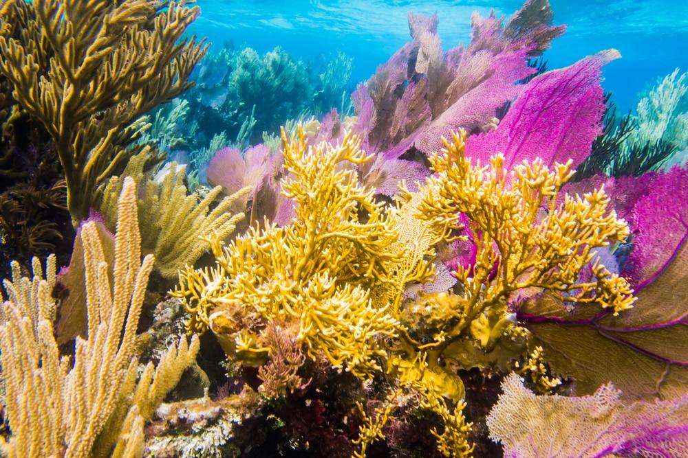 La Barrière de corail du Belize