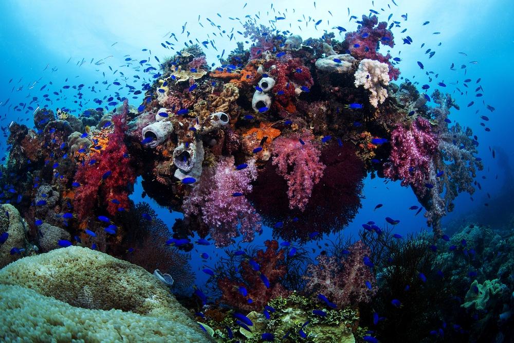 Le Truk Lagoon en Micronésie