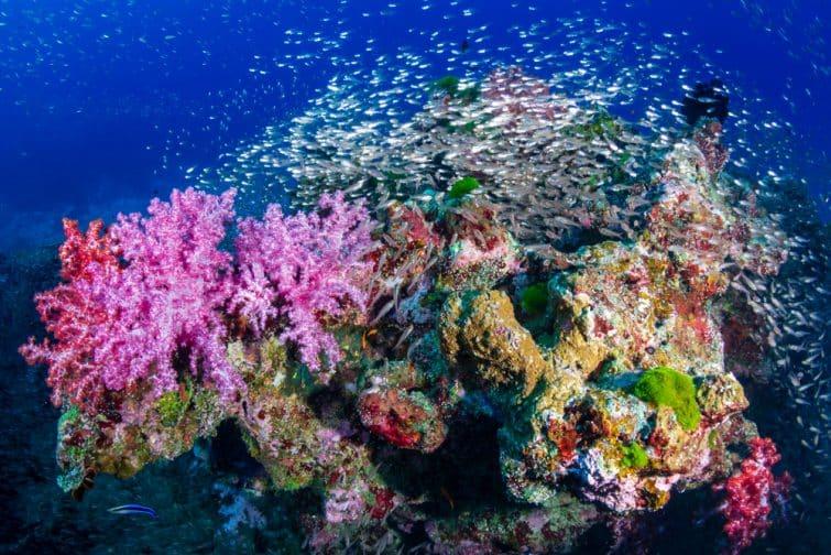 Les îles Similan plongée