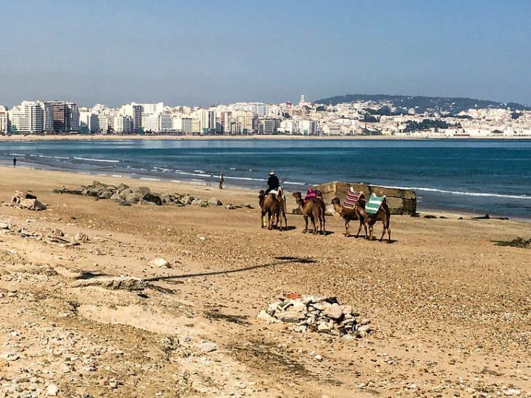 Plages Tanger et chameaux