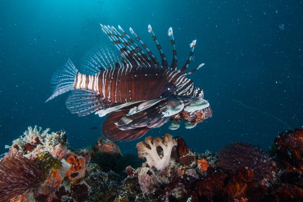 Zanzibar poisson