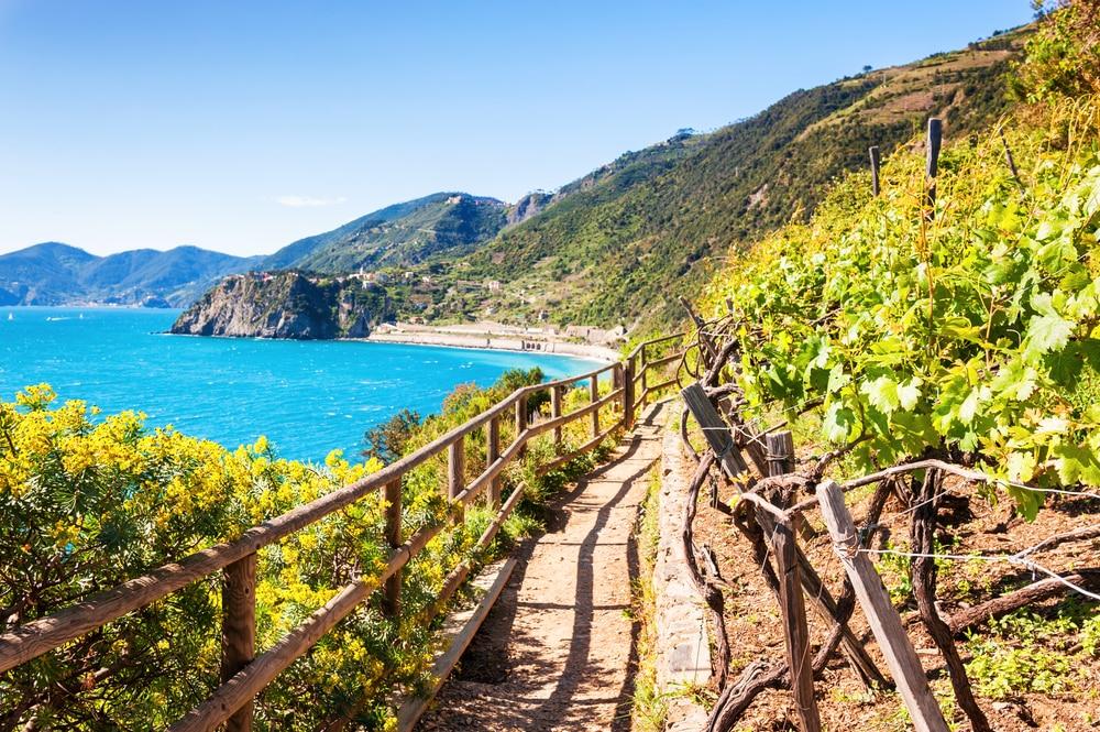 Vignobles et mer, Cinque Terre, Italie