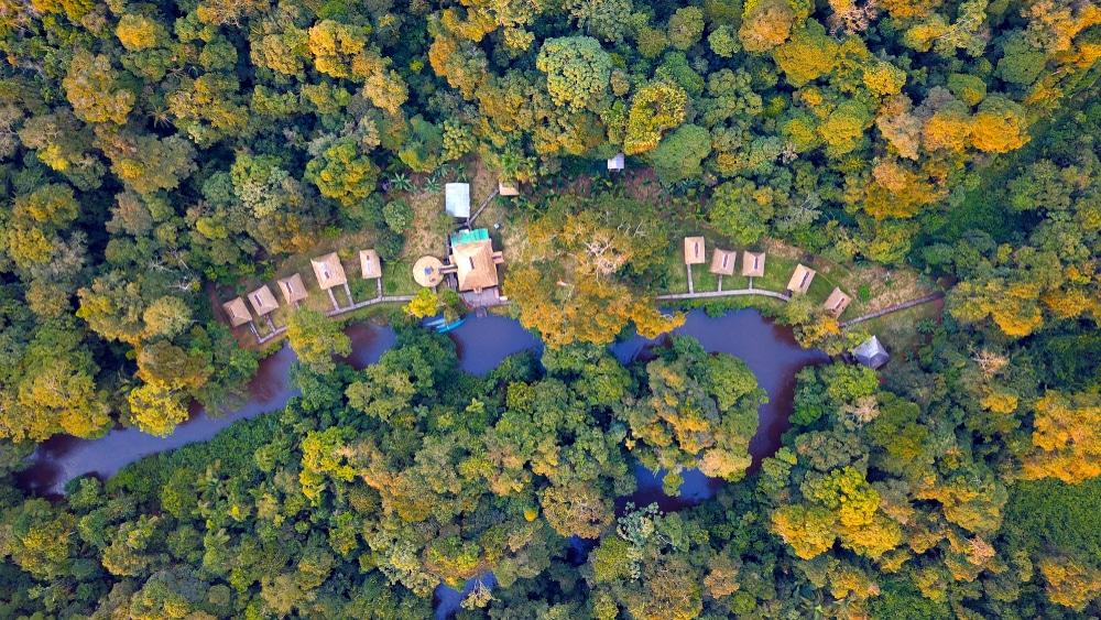 Vue aérienne de la forêt amazonienne à Cuyabeno