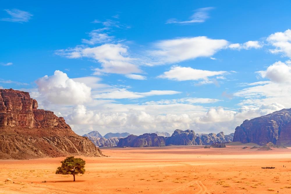 Arbre dans le désert de Wadi Rum