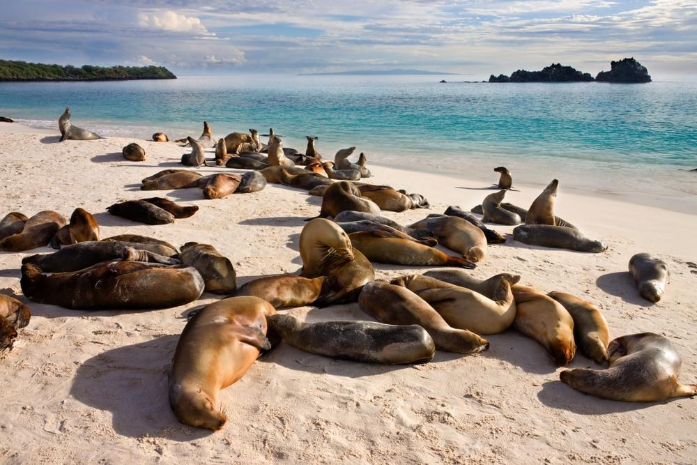 Lions de mer à Galapagos