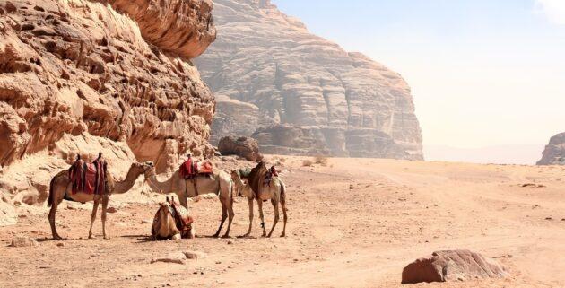Jordan Trail : voyage sur la Route des Rois