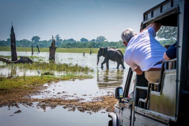 Safari dans le parc national d'Uda Walawe : réservations & tarifs