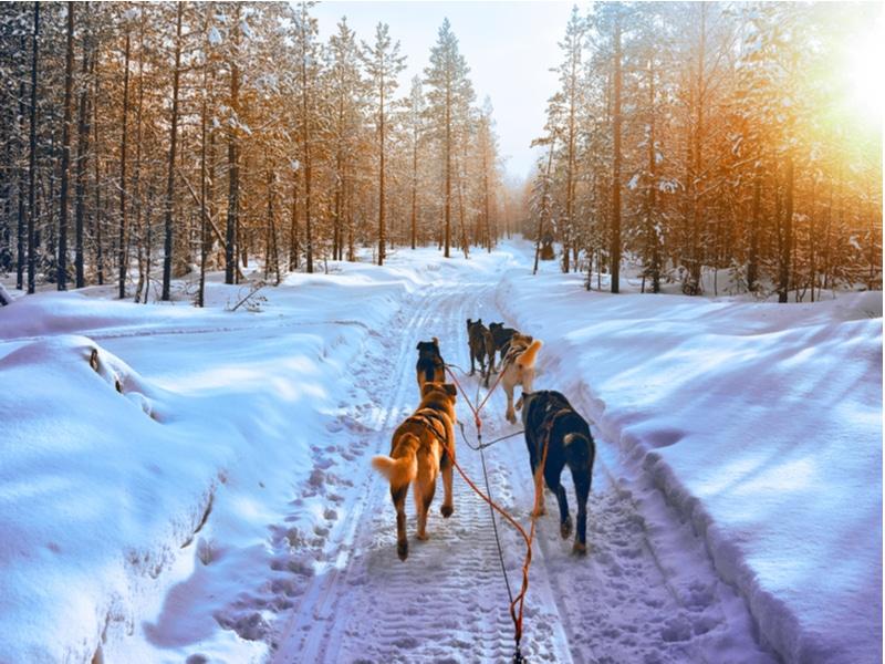Balade en chiens de traîneau, Finlande