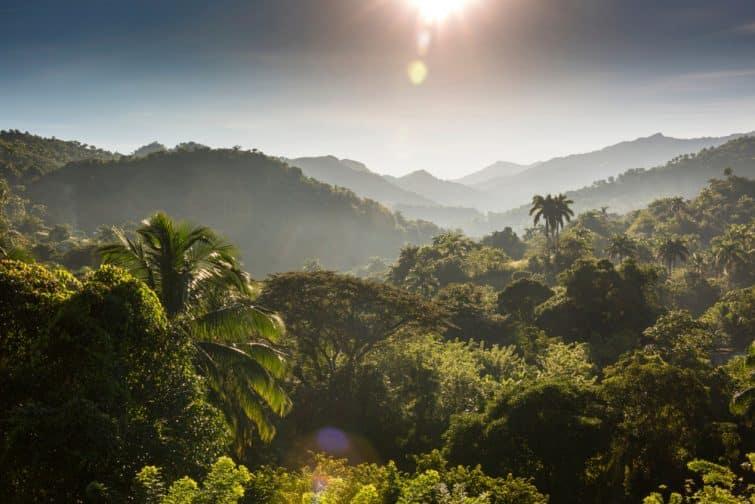 Forêt tropicale à Sierra Maestra, Cuba