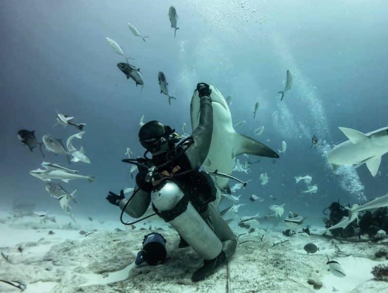 Plongée à Tiburones Toro, Cuba