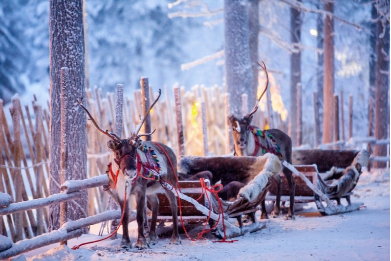 Traîneau à rennes en Finlande