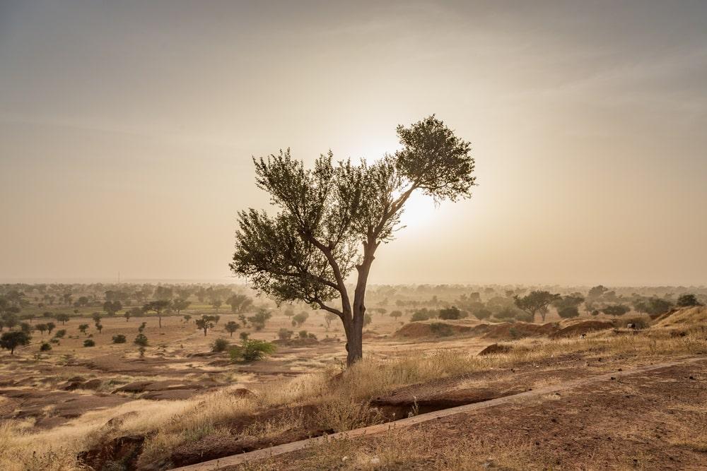 Accacia au milieu du désert, Sahel