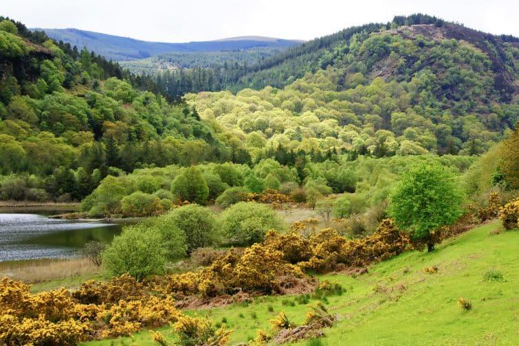 Glendalough Scenic Park, County Wicklow, Republic of Ireland
