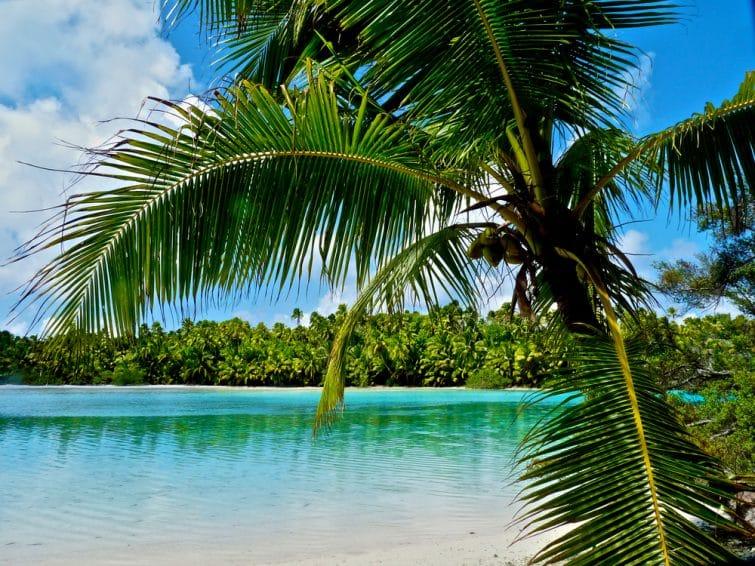 Palmier sur la plage d'Atiu, Îles Cook
