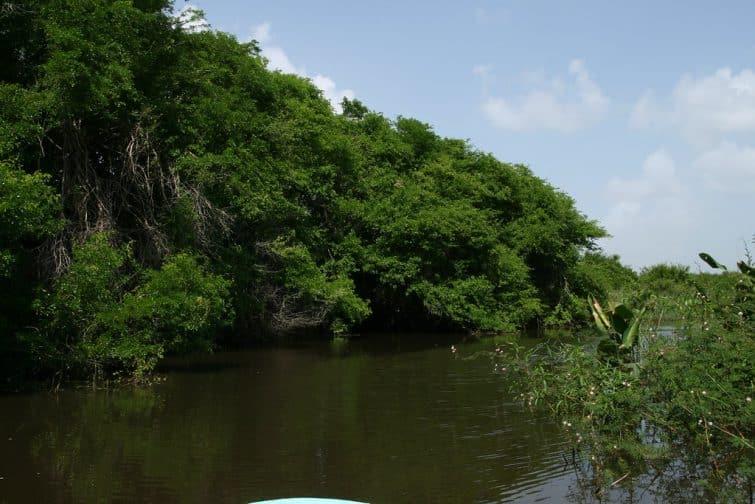 Le Crooked Tree Wildlife Sanctuary