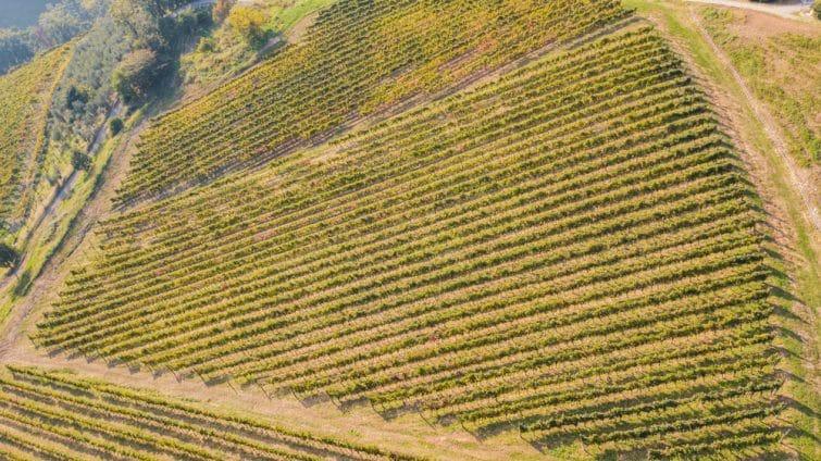 Vignoble de Scanzorosciate