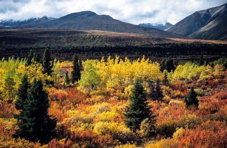 Paysage du Yukon durant l'été indien