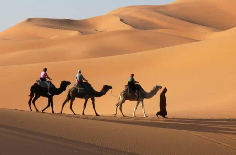 chameaux maroc