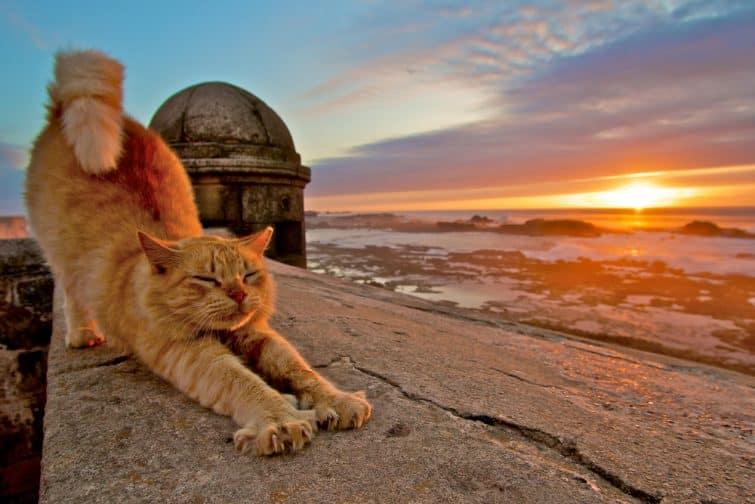 Coucher de soleil à Essaouira