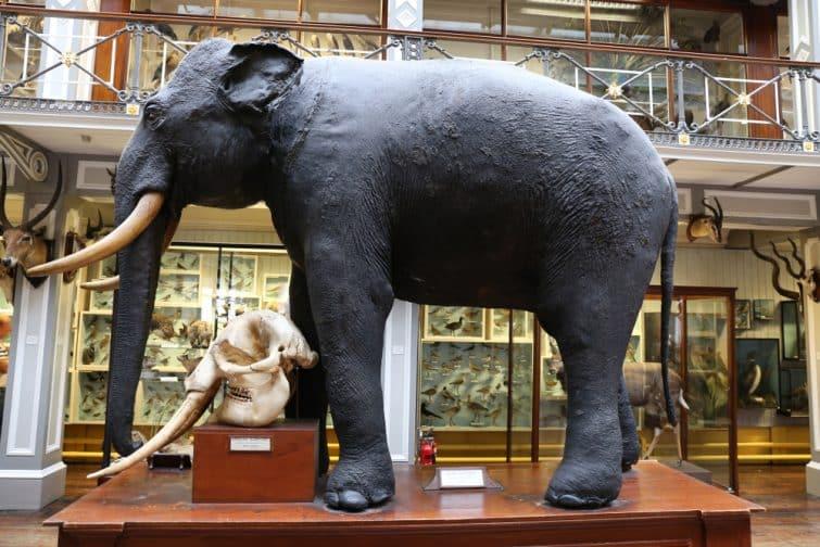 Intérieur du Musée d'Histoire Naturelle de Dublin