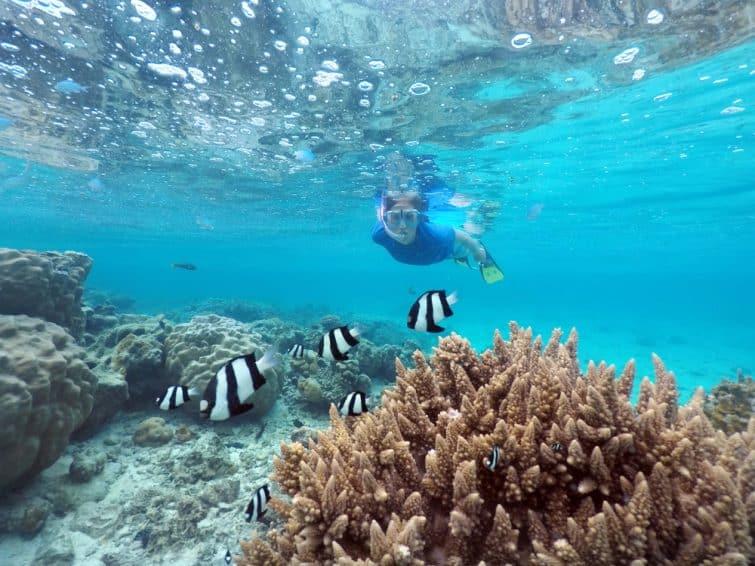 Plongeuse observant des poissons à Rarotonga, Îles Cook
