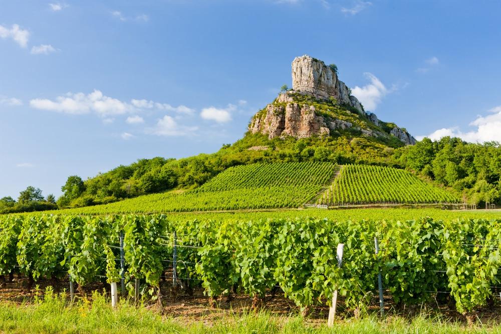 Vignoble près de Dijon